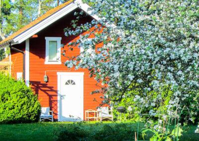Rosenberg gård med den lilla stugan i körsbärsblom