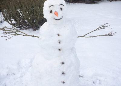 Busa i snön på vintern.